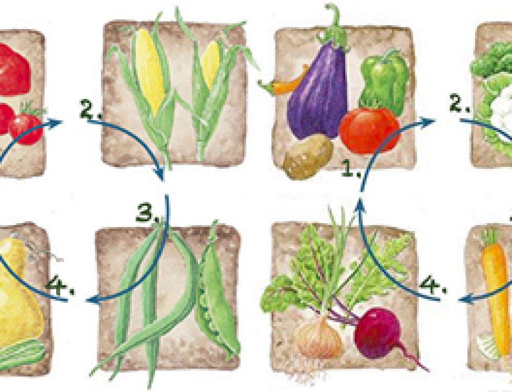 Crop Rotation & Companion Planting