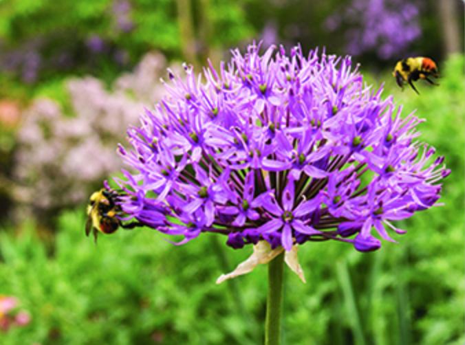 flor y abejas