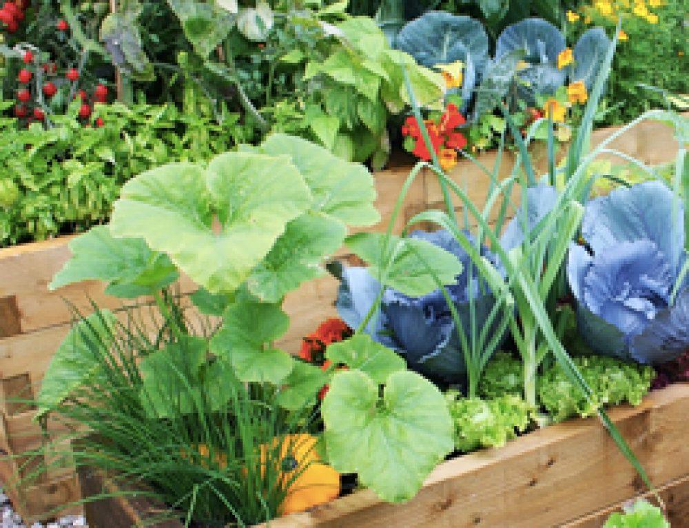 10 Organic Gardening Tips